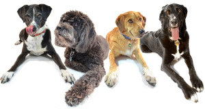 A group of dogs of a variety of different breeds lounging with each other