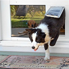Pet Doors For Windows Windows Dog Door And Cat Door Inserts