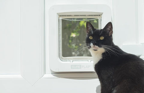 black cat next to sureflap microchip pet door connect