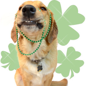 dog wearing green saint patrick's day beads in front of green clovers