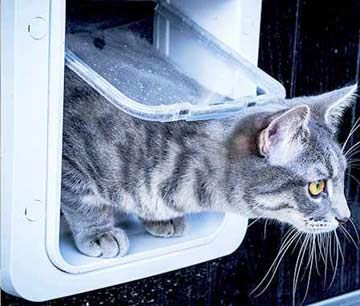What is the best electric pet door: the Sureflap or the Cat Mate cat door?