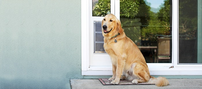 Dog sitting in front of a sliding glass pet door insert