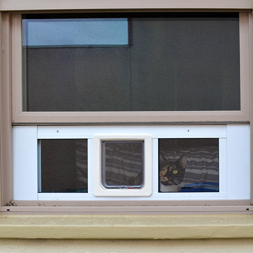 A cat looking through the clear panel on the Ideal