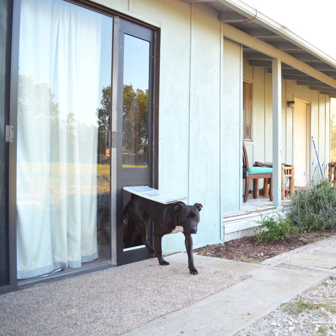 A black dog entering a backyard through the Endura Flap Quick Panel 3.