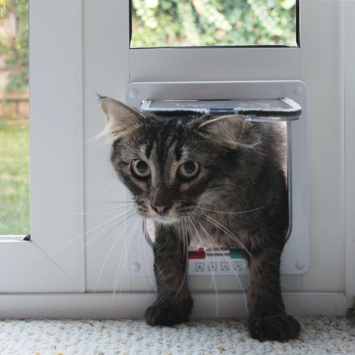 A cat pushing up the clear, rigid flap in order to use the Whiskers and Windows Cat Door