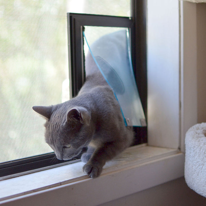 Gray cat using flexible Hale cat door for screens