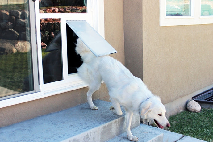 A large white dog exiting a house through the