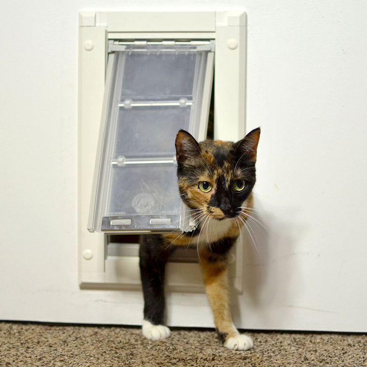 cat walking through endura flap cat door