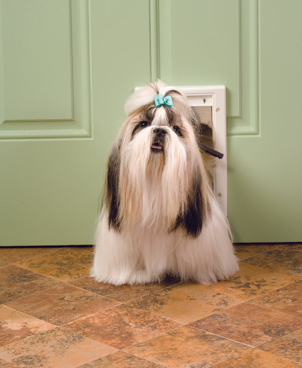 A small dog using the Petsafe Plastic pet door