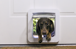 dog next to the sureflap dog door microchip pet door connect