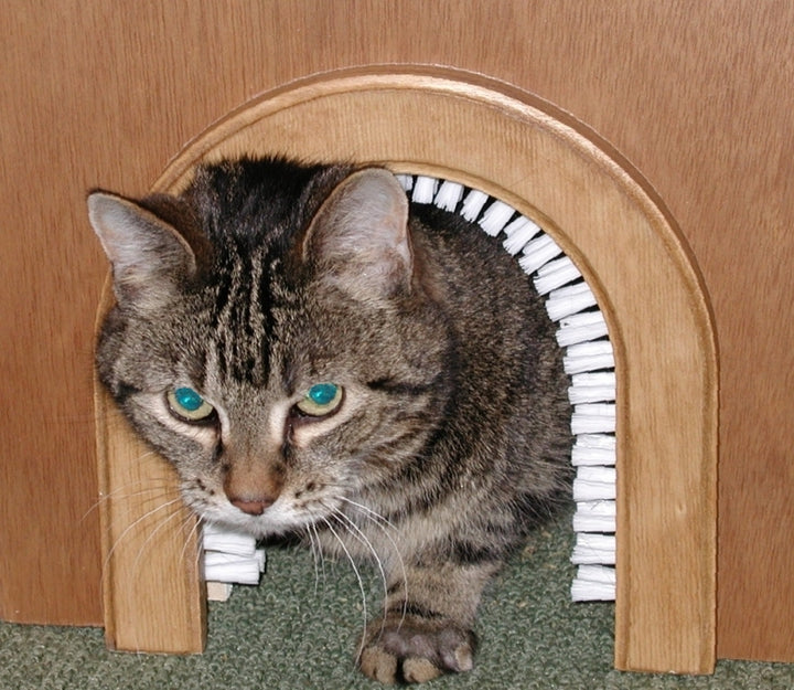 cat using cathole interior cat door