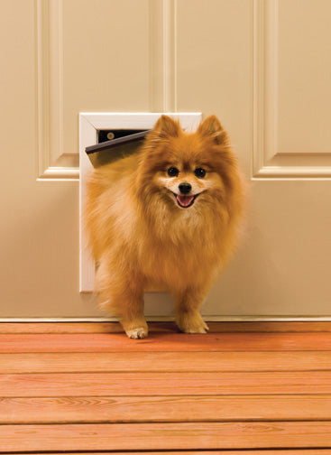 small dog using petsafe freedom pet door