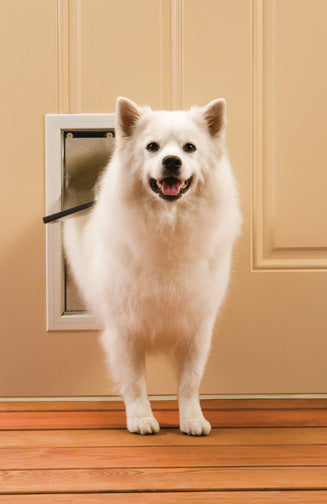 medium white dog using petsafe freedom aluminum pet door
