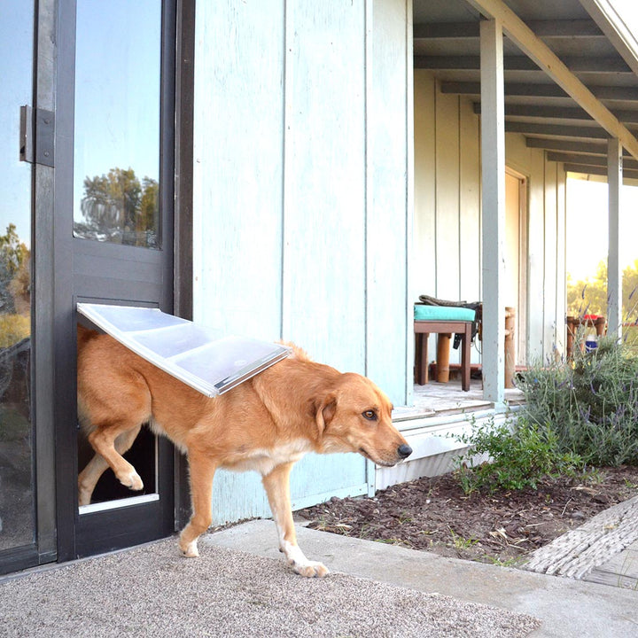 Golden Retriever using the bronze framed Endura Flap Thermo Panel 3e large flap