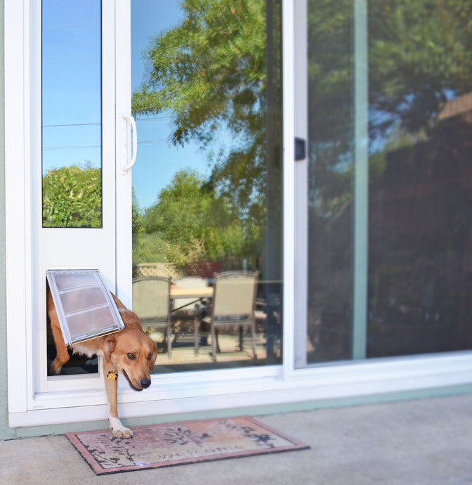 Golden retriever using the Endura Flap Thermo Panel 3e