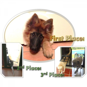 First, second, and third place winners for the contest using pet doors