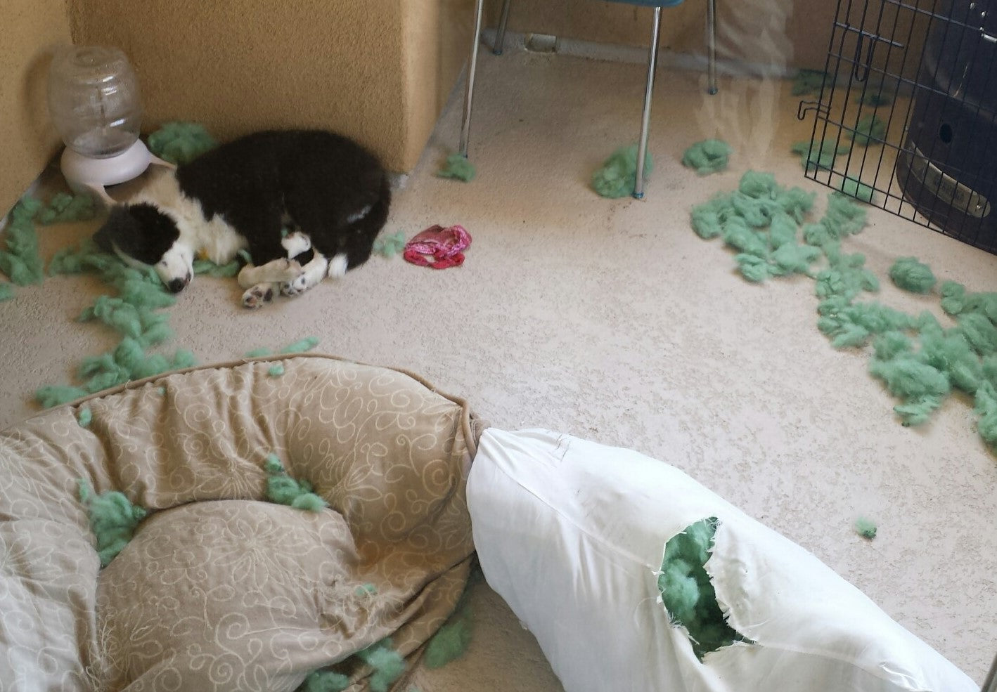 dog chewed couch