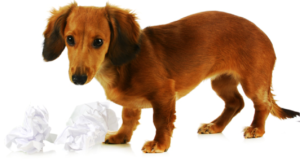 How to get rid of fleas on puppies? learn about flea control for dogs/flea control for cats