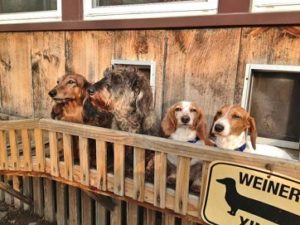 Dogs thinking about homemade dog door ideas - best doggy doors