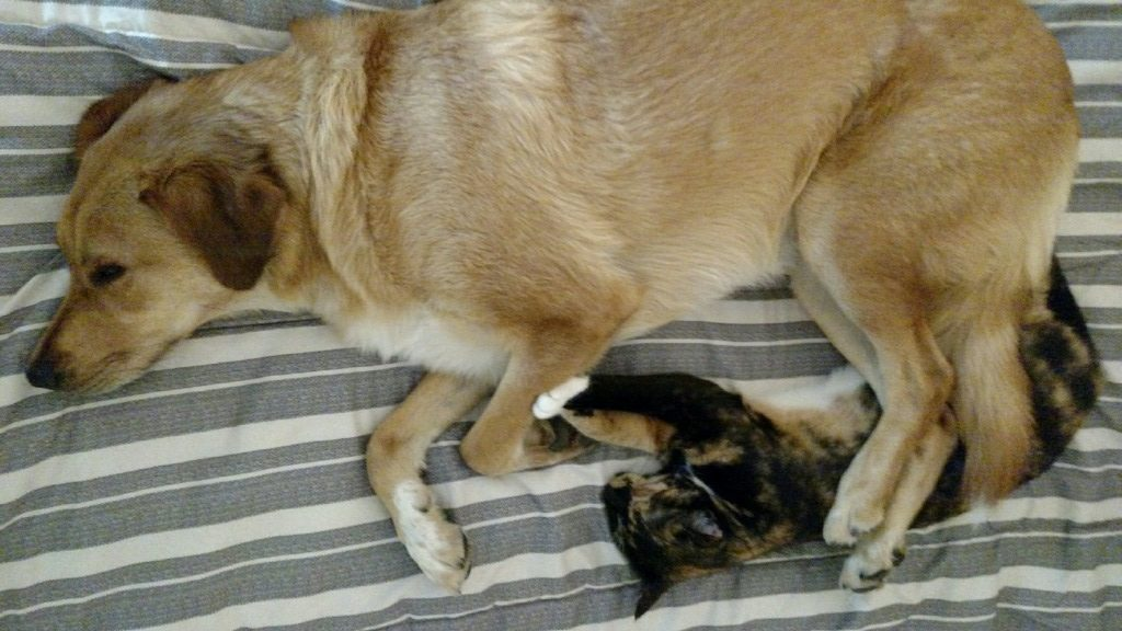 dog and cat sleeping meaning