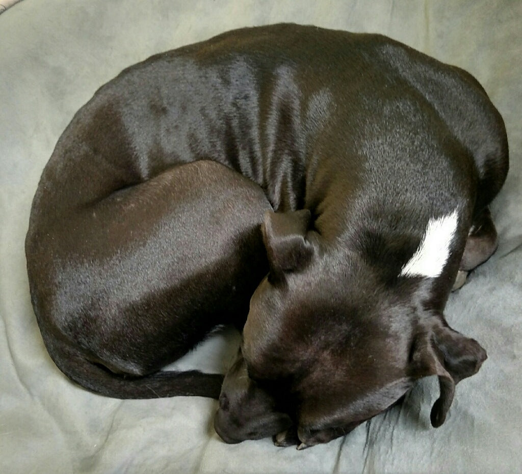 dog curled up