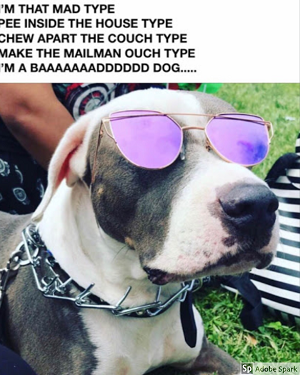 A dog wearing cool purple glasses with paroady lyrics to Billie Eilish's song 'Bad Guy' and=