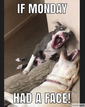 A vicious looking pitbull in mid lunge to bite another dog, labeled with white text 'If Monday had a face!'
