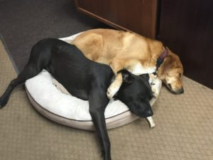 dog friendly workplaces are the best! bring dog to work at PetDoors.com