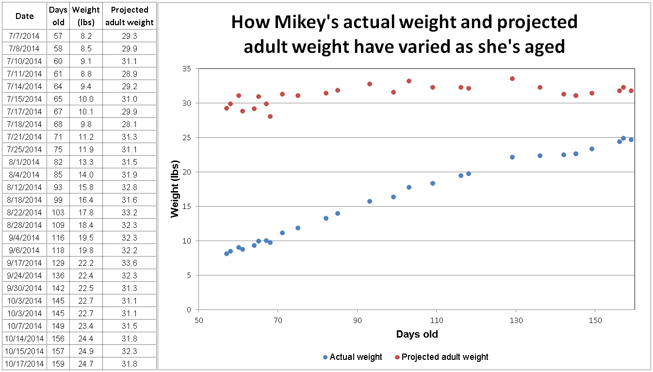 Mikey's Actual and projected weight growth from puppy weight calculator