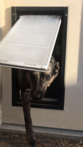 dog using pet flap - how to install a doggie door