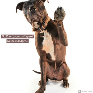 A brown dog against a white background holding up a paw saying 'No Karen, you can't speak to the manager...'