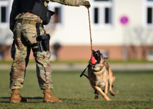 training regimen armored dogs for military combat