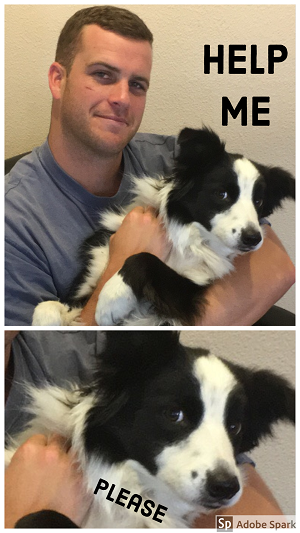 A border collie being held by a man and pleading 'help me.' The camera zooms on the dog's face when it says 'please.'