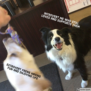 A dog playing with a toy, labeled 'extrovert frens having fun and enjoying life.' Next to it is a calmer dog, labeled 'introvert me who still loves and supports them.'