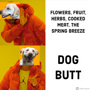 A dog's face edited over the Drake meme. Being rejected: 'flowers, fruit, herbs, cooked meat, the spring breeze.' Being chosen: 'dog butt.'