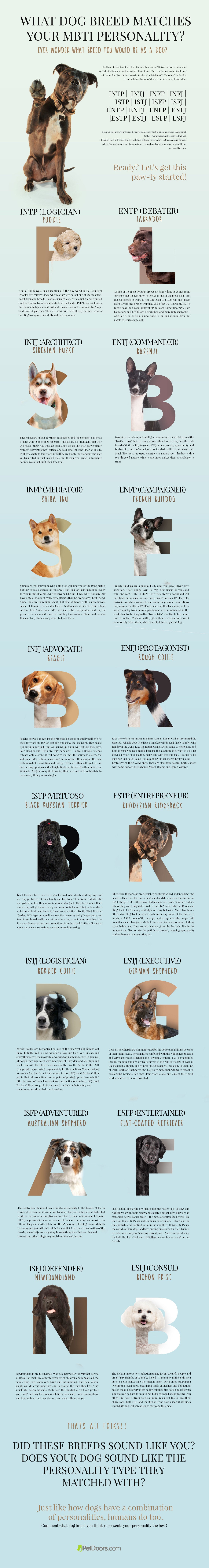 mbti dog personality infographic - how to choose the right dog for you