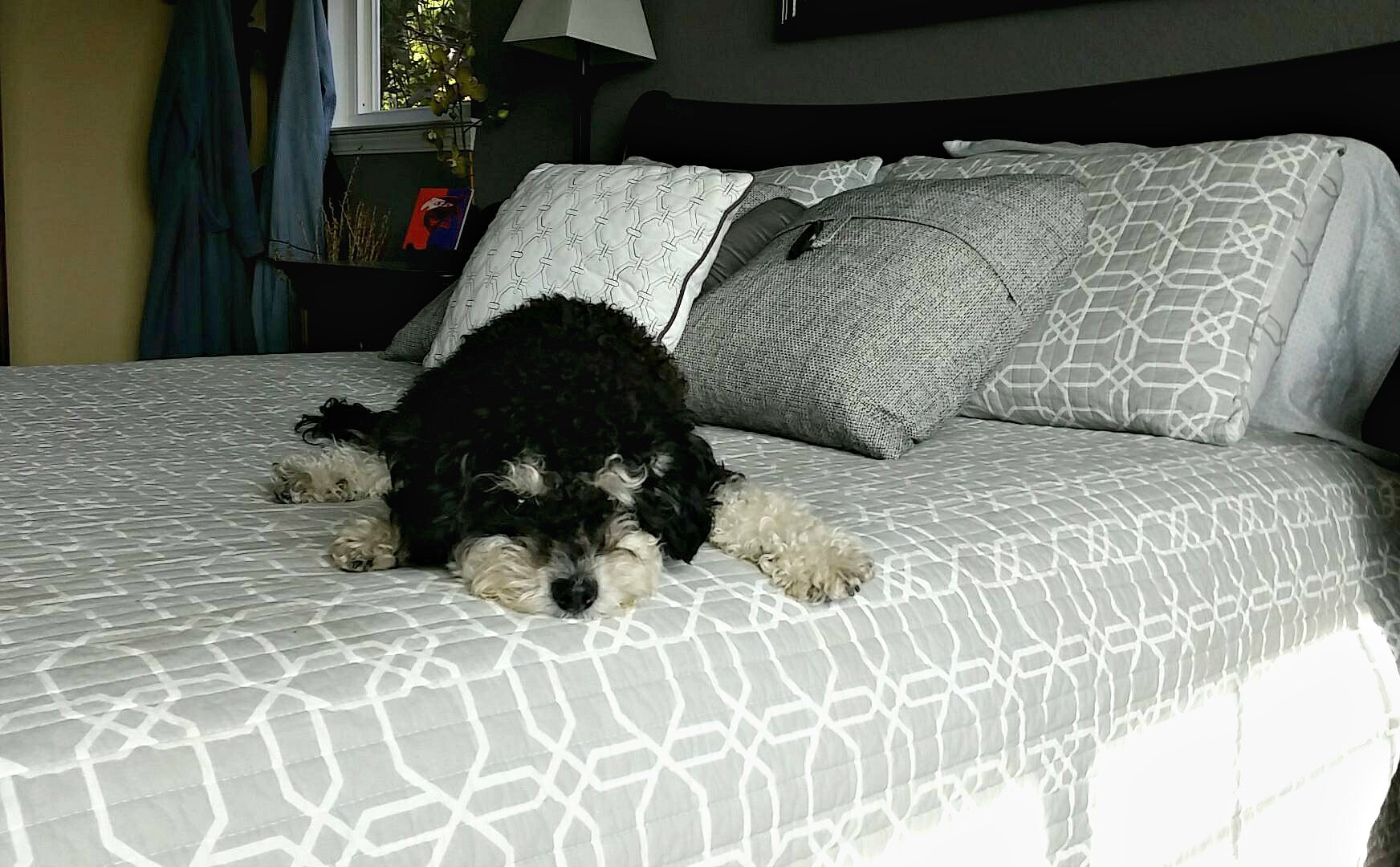 dog on bed - what does dog twitching in sleep mean?