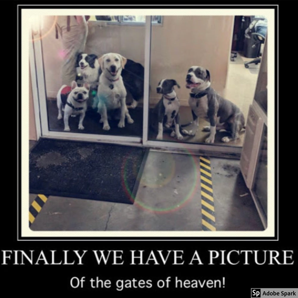 Five dogs crowding glass sliding doors surrounded by a black border with white text that says 'Finally we have a picture of the gates of heaven!'