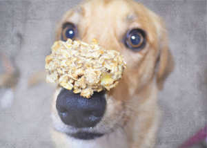 Loki with healthy dog treats - make your own dog treats for your perfect puppy
