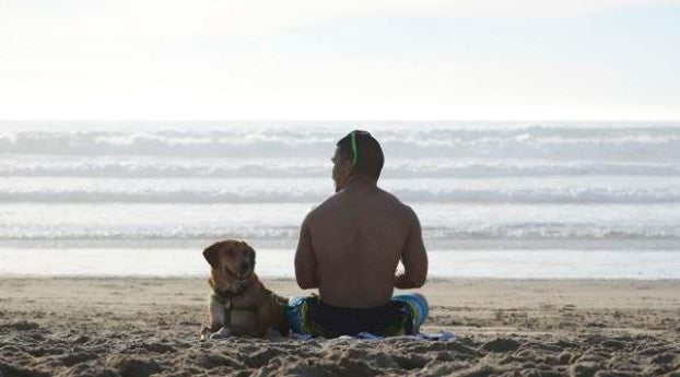 loki on the beach; save a pet by adopting a dog from a shelter