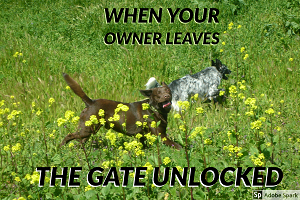 Two dogs frolicking happily through a grassy field with yellow flowers. The text reads: 'When your owners leave the gate unlocked.'