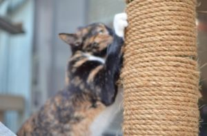 some cat patios have these scratch posts and other toys