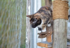 cat in a cat outdoor enclosure thinking about cat patio ideas