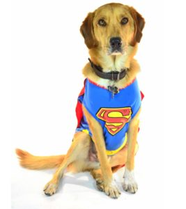 mutt dog wearing a superman costume