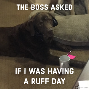 An unimpressed dog wearing headphones and sitting with a mug, sticky notes, and a pen. The text reads: 'The boss asked if I was having a ruff day.'