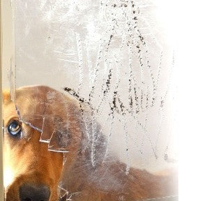 dog looking through cracked pet flap - best doggie door for dogs who chew?