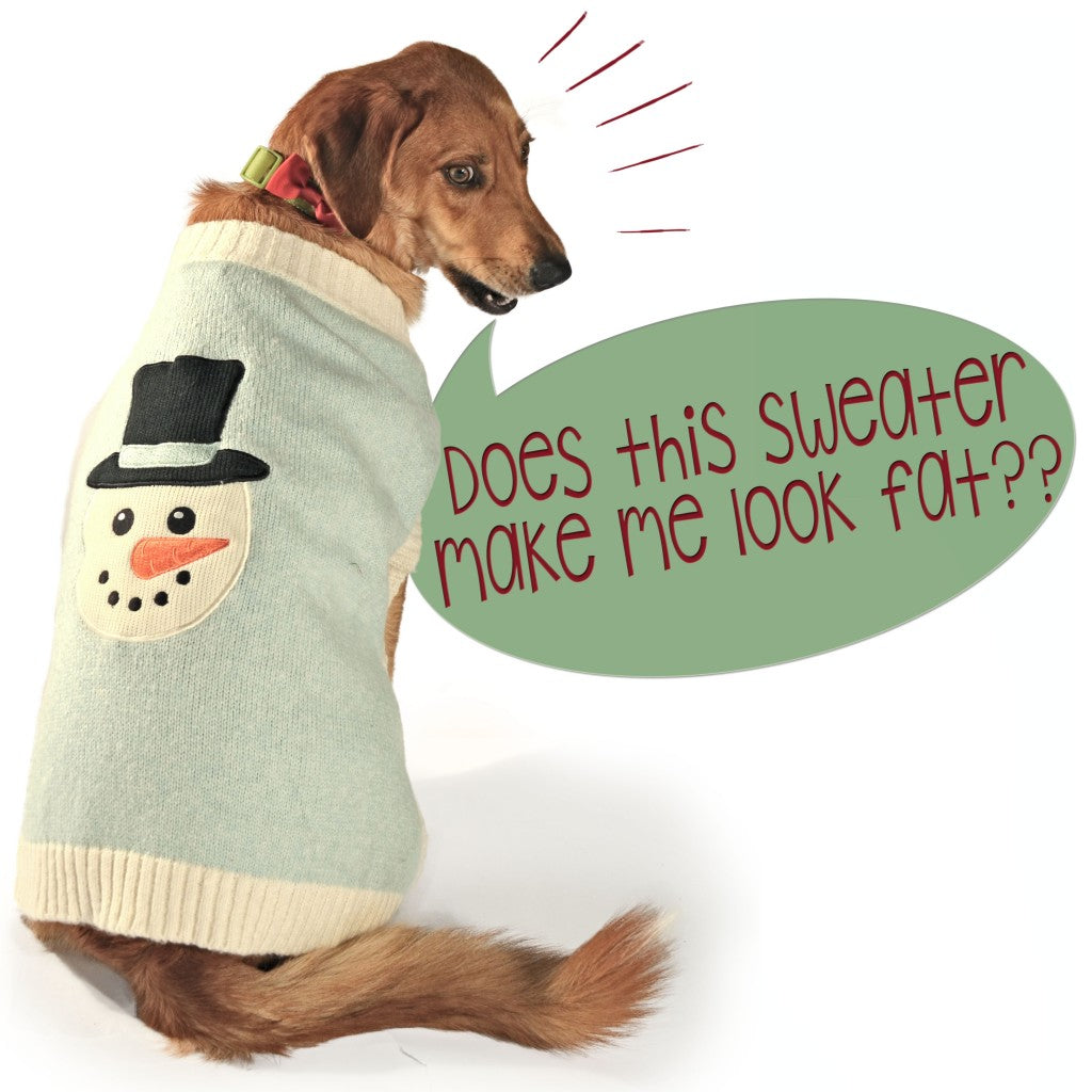 an annoyed dog wearing dog clothes complains about funny outfits like sweaters for dogs
