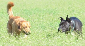 lymes disease in dogs can be caused by ticks