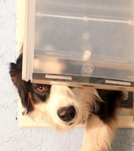 A dog struggling to use a dog door that is not the right size