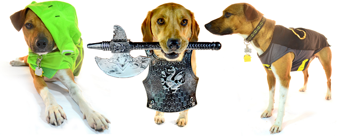 dogs in costumes for halloween. Dog costume ideas. Dogs in frog costume, medieval costume, and Batman costume.